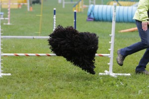 LM6A0619_830am Agility for Fun Kelly