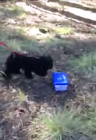 Noe finding boxed scent in forest